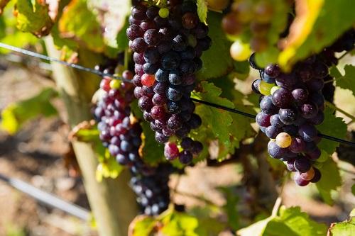 acheter un vignoble à Bandol